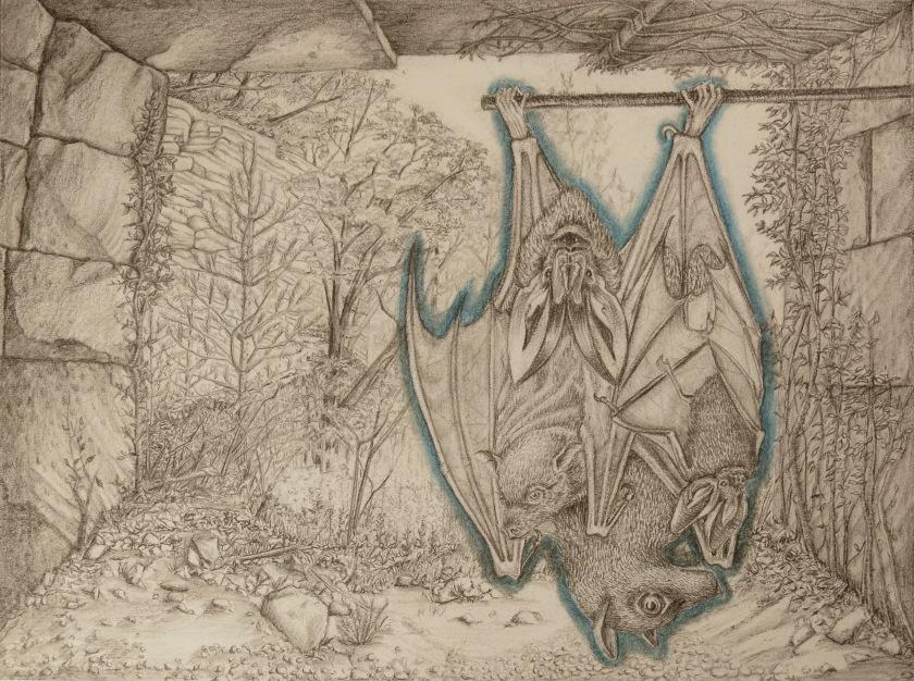 bats in bonnieux